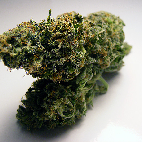 fruit-haze-bud