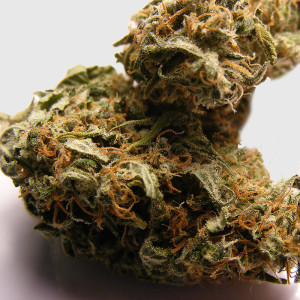 irish-haze-7-bud