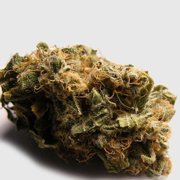 mighty-mite-indica_bud